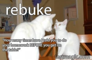 A cat rebukes another cat.