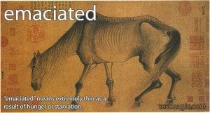 SAT Vocab: emaciated