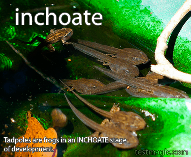 "A tadpole illustrates the challenge vocabulary word ""inchoate"""
